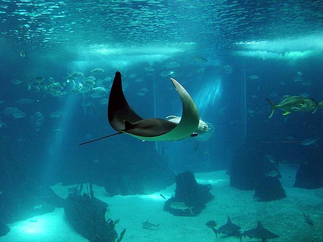 витязево океанариум фото